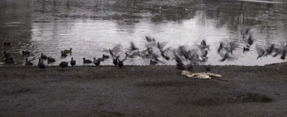 duiven-over-breadman-2